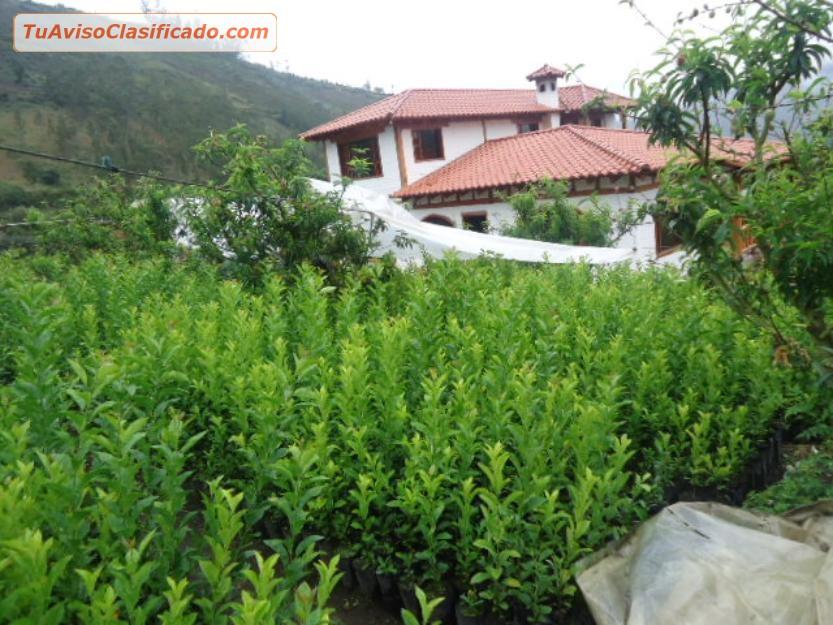 Plantas Forestales  Jardín y Viveros > Plantas y Semillas  Pr