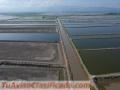 I an looking for an shrimp farming