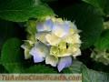 venta-de-plantas-de-citricos-injertos-de-toda-variedad-1.jpg