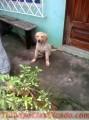 cachorros-golden-retriver-4.jpg