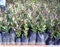plantas-forestales-2.jpg
